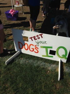 Bark IQ test